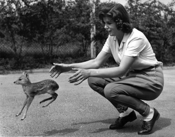 orphan deer