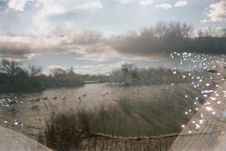 Flamingos / Camargue - Sardina Lomography x Kodak Portra 500
