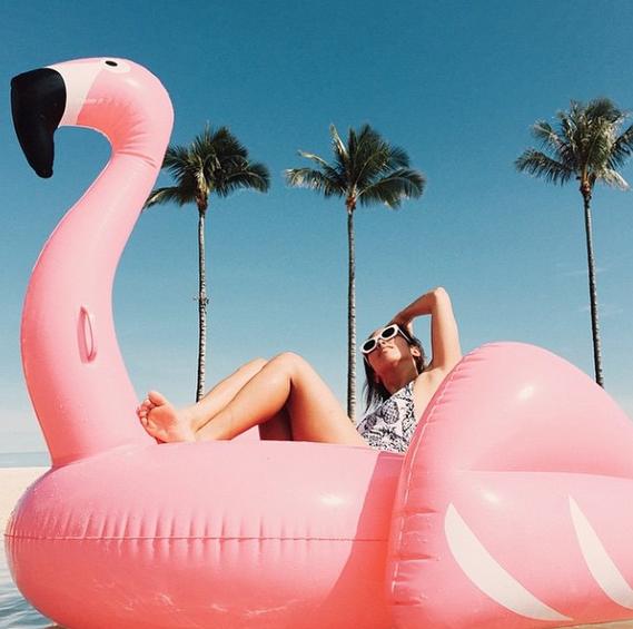Barcelona flamingo