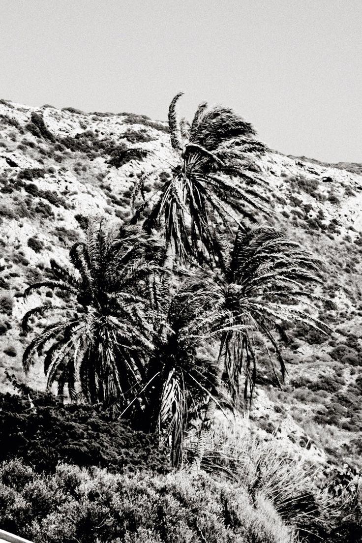 black palmtrees