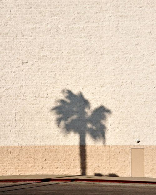 palmtree shadow light
