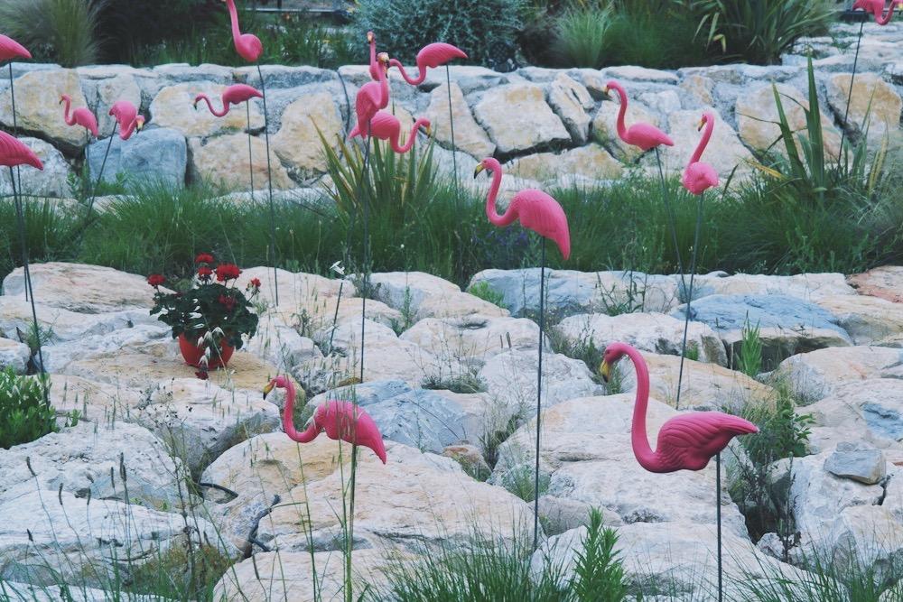 TINALS 2016 - flamingo